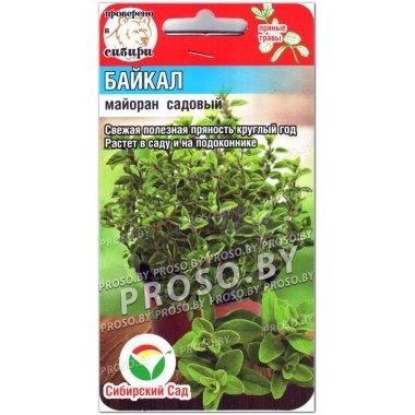 Майоран садовый Байкал