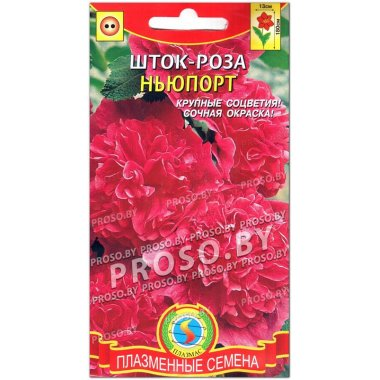 Шток-роза Ньюпорт