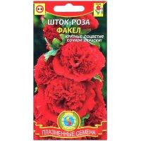 Шток-роза Факел