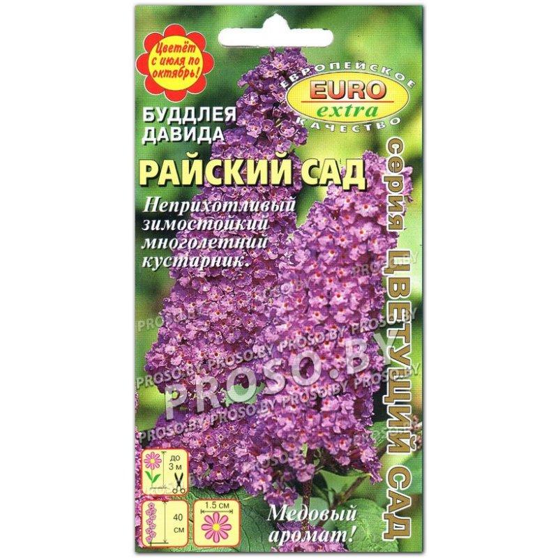Буддлея Давида Flower Power: купить саженцы в Украине - цена от ... | 800x800