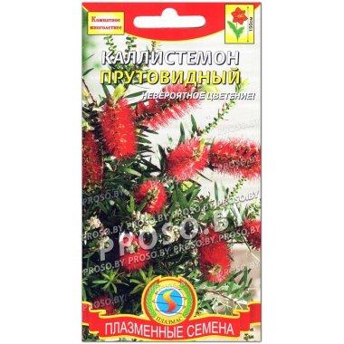 Каллистемон Прутовидный