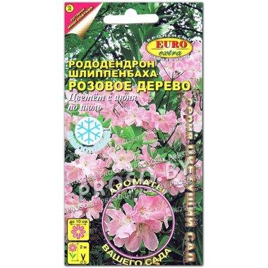 Рододендрон Розовое дерево