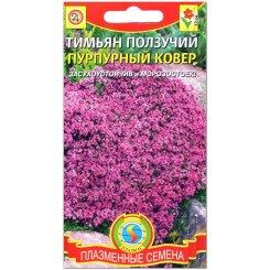 Тимьян (чабрец) Пурпурный ковер