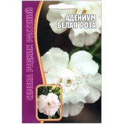 Адениум Белая роза