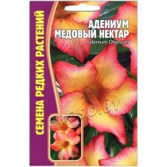 Адениум Медовый нектар