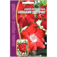 Адениум пестролистный Аленький цветочек