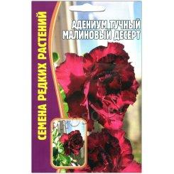 Адениум тучный Малиновый десерт