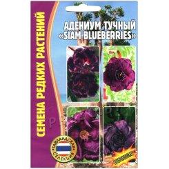 Адениум тучный Siam blueberries