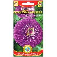 Цинния Фиолетовая королева