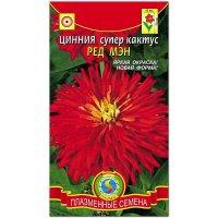 Цинния супер кактус Ред мэн