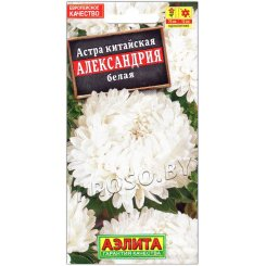 Астра Александрия белая