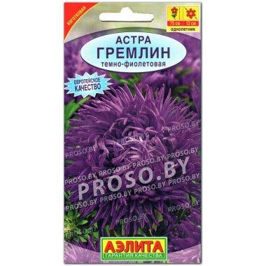 Астра Гремлин темно-фиолетовая