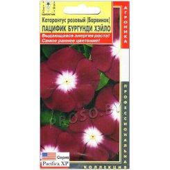 Катарантус розовый Пацифик бургунди хэйло