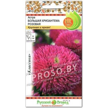 Астра Большая хризантема розовая