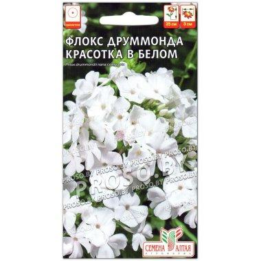 Флокс Красотка в белом Друммонда