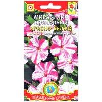 Мирабилис мраморный Красно-белый