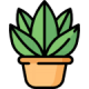 Комнатные семена цветов и растений